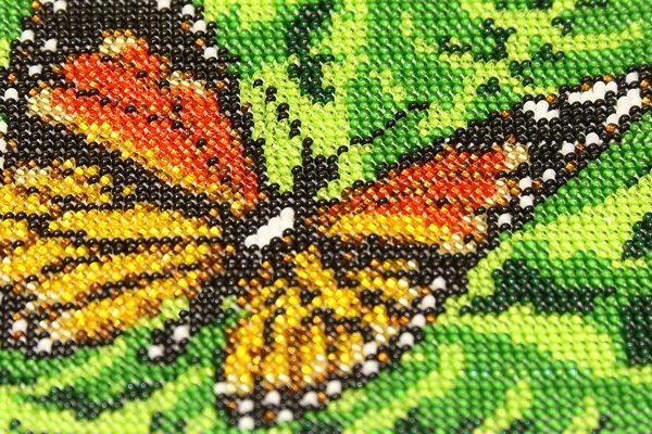 Arazzo-Butterfly-real